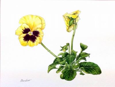 はじめての植物画